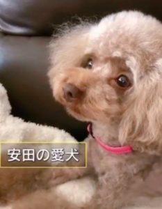 安田章大 犬 名前