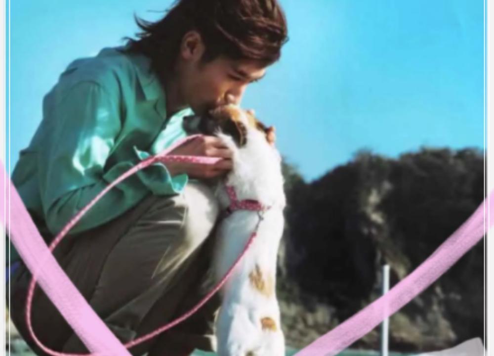 愛犬、こむぎ、ペット